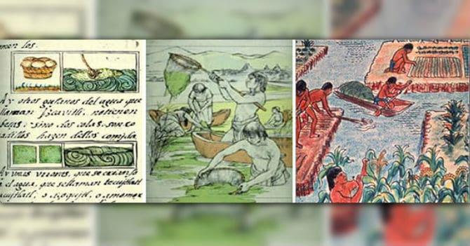 Les aztèques récoltaient la spiruline
