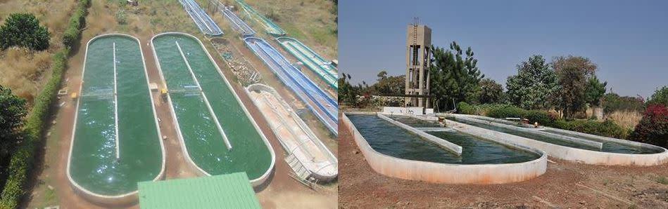 Ferme de Spiruline au Burkina Faso