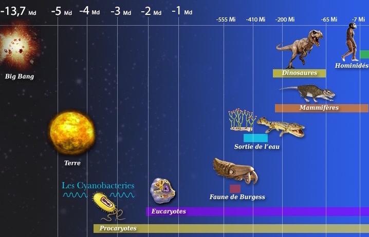 La spiruline a contribué à la création de la vie sur Terre